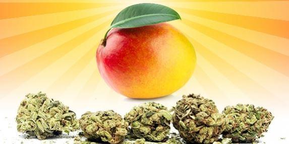 Marihuana fű mangó